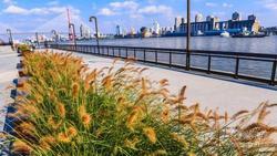 2.8公里杨浦大桥以西滨江段建设完成