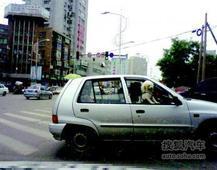 葫芦岛:宠物狗坐上副驾驶 惬意向外张望