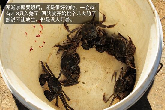 浪漫休闲之旅-开着法系车看薰衣草-后记:钓螃蟹