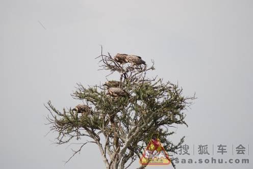 马拉野生动物保护区