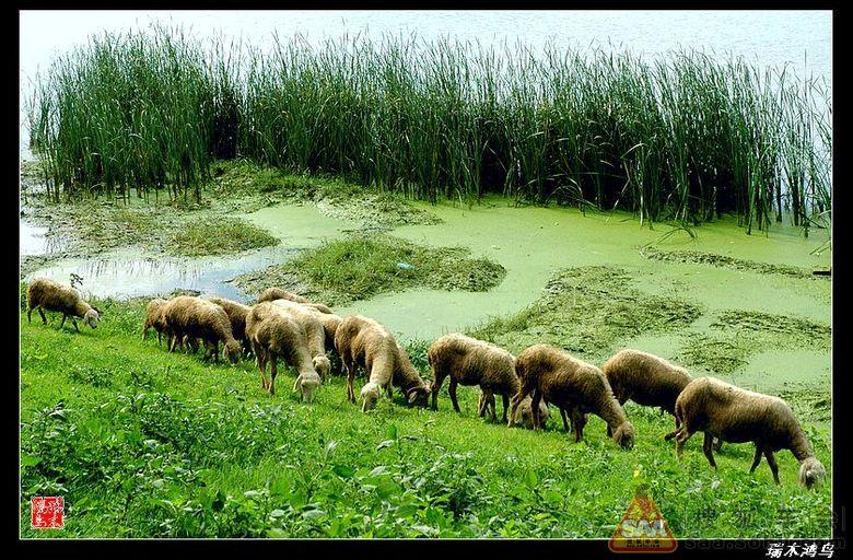 都市牧羊曲,牧羊曲简谱歌谱,二胡独奏牧羊曲