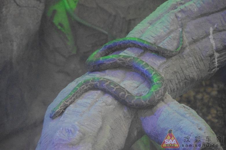 动物园大蟒蛇馆图片