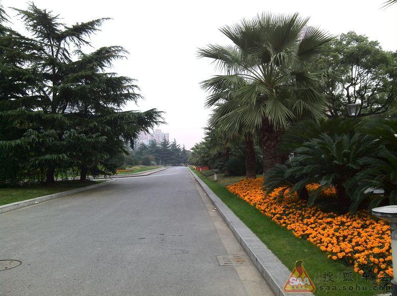 工作之余行驶在上海闵行区,分享街边景色_哈弗