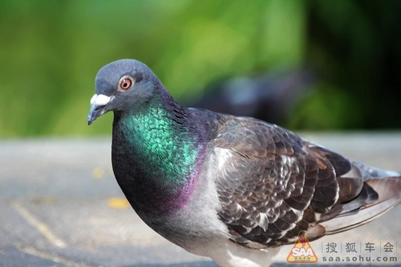 据日本《动物的大世界百科》介绍