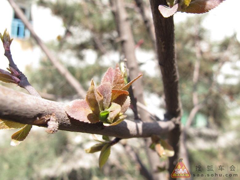 小树发芽了