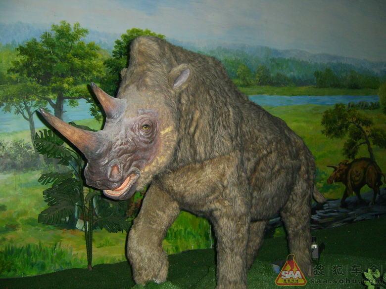 自驾游  和政古动物化石博物馆存放的化石标本均为已灭绝动物的化石