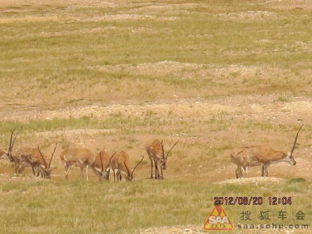 轻野西藏之动物世界图片