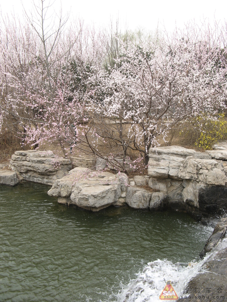 游北京植物园桃花节